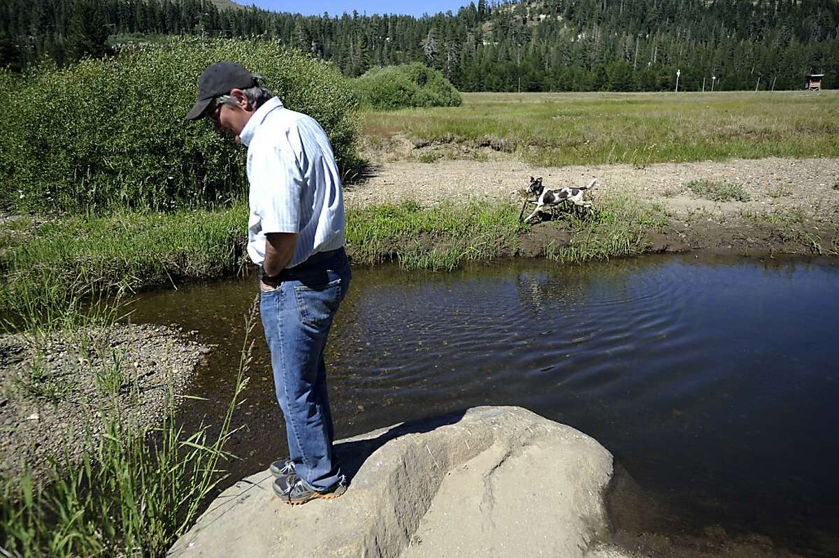 Perry Norris(L) of the Truckee Donner Land Trust and his dog Tracy walk past a creek in Norden Meadow Friday August 3rd, 2012 The Trust for Public Land secured a deal to buy 3,000 acres at Donner Summit saving it from a 950-home development.