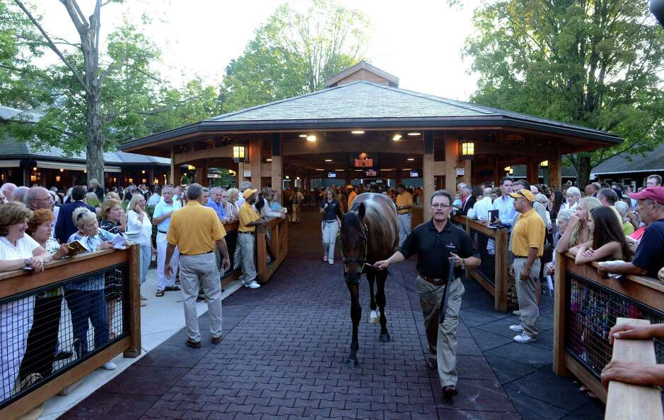 The yearlings move toward the sales ring at the Fasig Tipton Sales grounds in Saratoga Springs, N.Y.