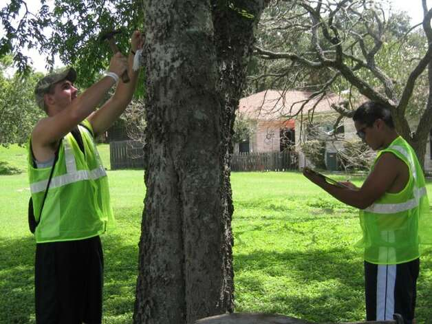 Members of Windcrest's Friends of the Park inventory project catalog a tree in Windy Hollow Park as part of an ongoing effort to categorize the trees in the city's parks. Photo: Photo Courtesy Of Windcrest Frie