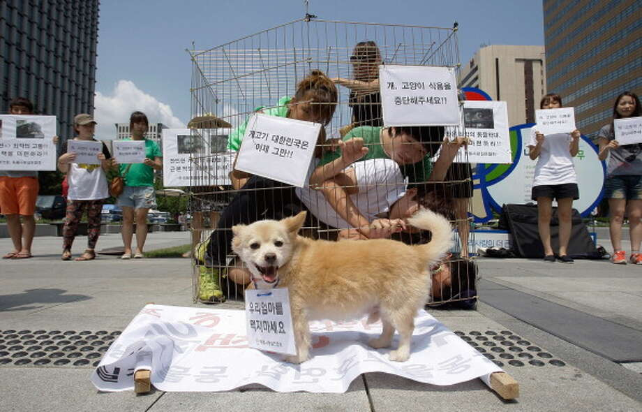 SEOUL, SOUTH KOREA - AUGUST 07:  Members of Coexistence for Animal Rights confine themselves in a cage as a protest against eating dog meat on August 7, 2012 in Seoul, South Korea. Dog meat is a traditional dish in Korea dating back to the Samkuk period (period of the three kingdoms BC 57 - AD 668), and July 15 is the day on which some South Koreans eat dog meat in the belief it will help them endure the heat of the summer months. Photo: Chung Sung-Jun, Getty Images / 2012 Getty Images