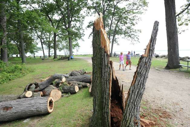 A storm-damaged tree at Greenwich Point, Tuesday afternoon, Aug. 7, 2012. Photo: Bob Luckey / Greenwich Time