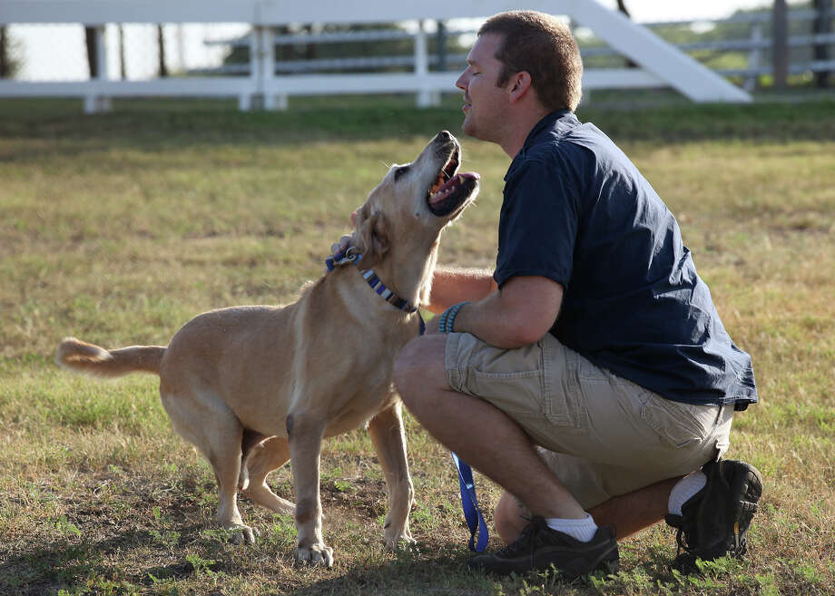 Military bomb-sniffing dog, Diego, an 8-year-old Yellow Labrador Retriever, reunites with Logan Black at Lackland Air Force Base, Tuesday, Aug. 7, 2012. Black, a former Army sergeant, was Diego's handler for two years prior to leaving the army in 2007. In 2006, they were deployed to Iraq where they were shaken up by an IED blast. Black was able to adopt the lab through the military adoption program. Photo: Jerry Lara, San Antonio Express-News / © 2012 San Antonio Express-News