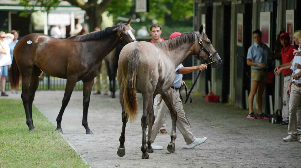 Business is brisk at the Fasig Tipton Sales grounds in Saratoga Springs, N.Y. August 5, 2012.  Two n