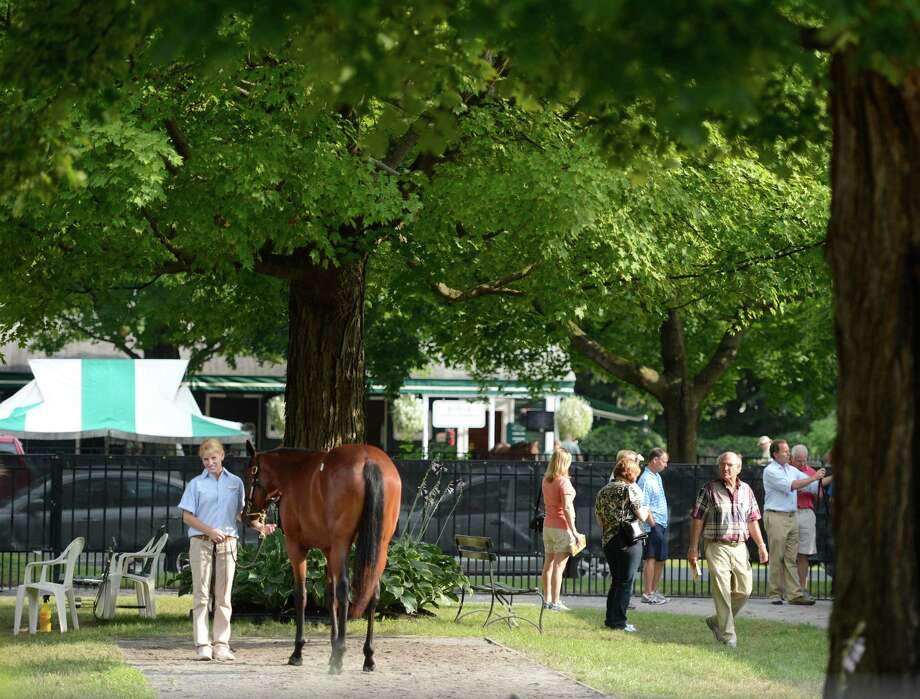 Yearlings are being shown at the Fasig Tipton Sales grounds in Saratoga Springs, N.Y. August 5, 2012.  Two nights of yearling sales start tomorrow evening in Saratoga. Photo: Skip Dickstein, TIMES UNION