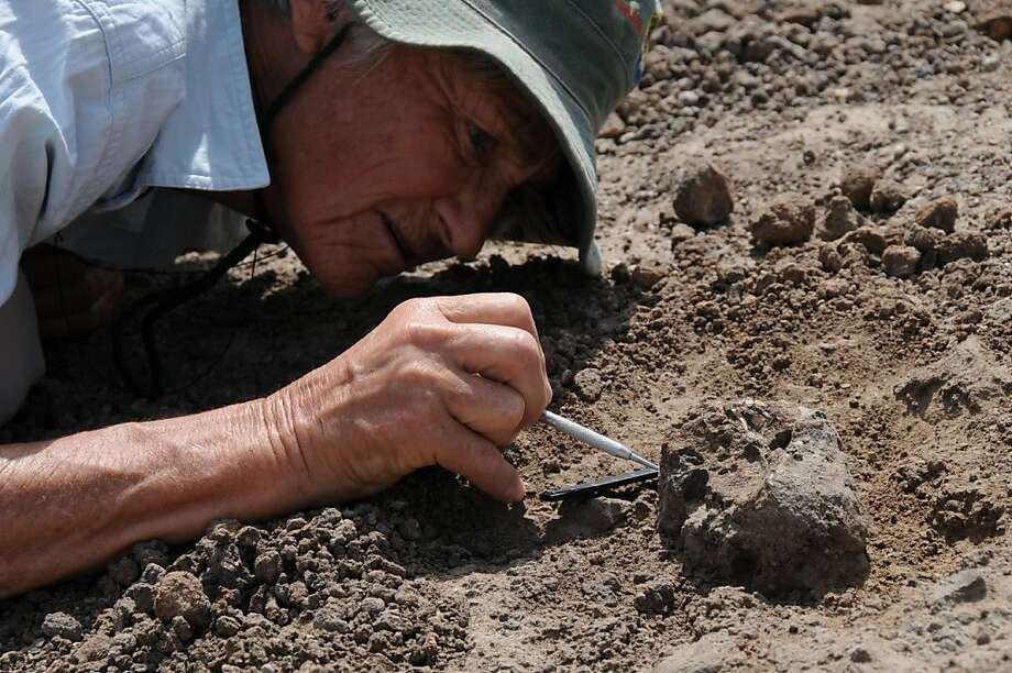 Scientist Meave Leakey excavates the ancient skull discovered in Kenya. Photo: Fred Spoor, Associated Press
