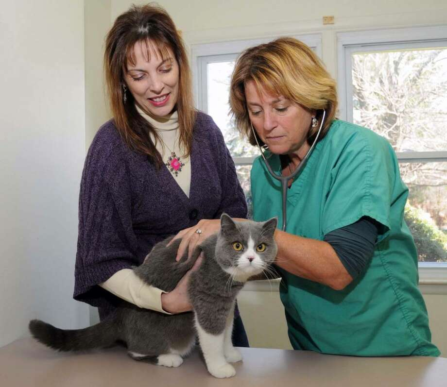 "Linda Francese of Brookfield, left, assists Dr. Sharon Eisen, owner of ""The Complete Cat"" in Brookfield, as she examines Foxy Roxy one of the British Short Hair cats that they breed. The two have co-written a book called ""Cat Tales: True Love Stories"" for more information go to their website at www.plaidpluscattery.com. Photo: Lisa Weir / The News-Times"