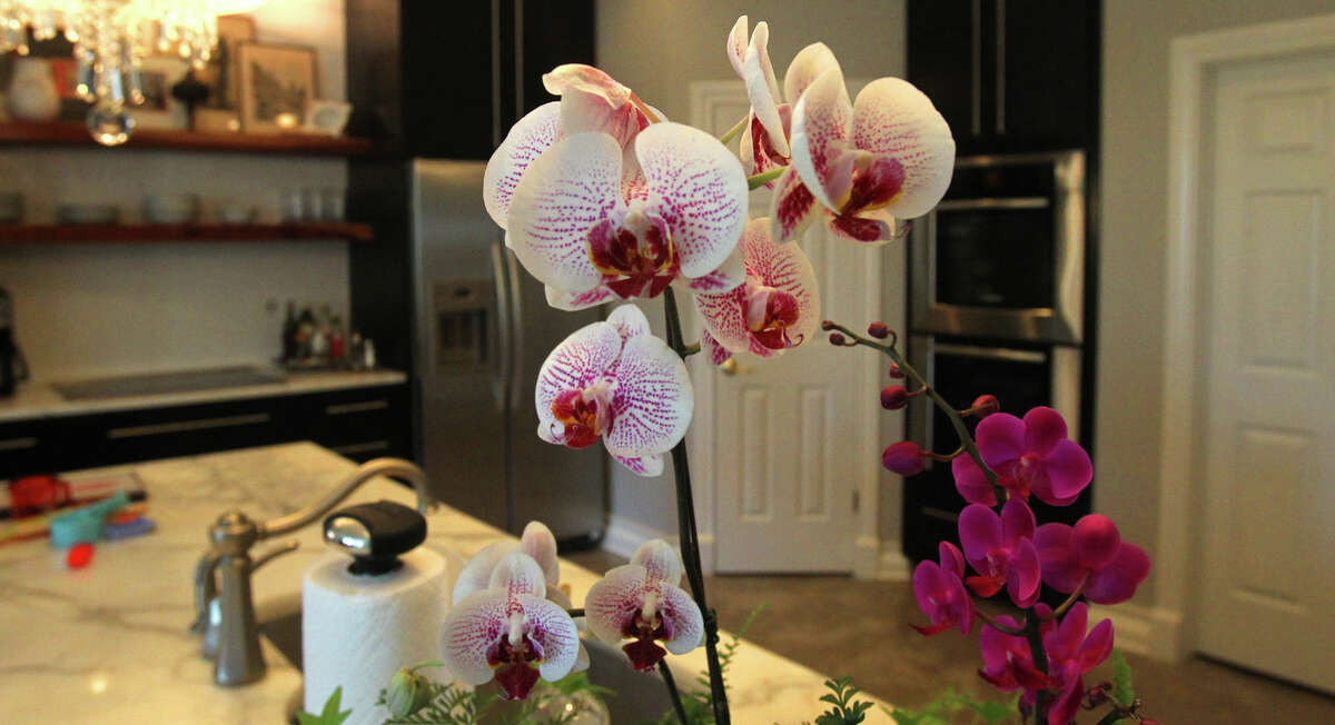 An orchid graces the countertop on the island in the kitchen of Tamara and Jason Riggan on San Antonio's North Side. (Monday August 6, 2012) John Davenport/©San Antonio Express-News