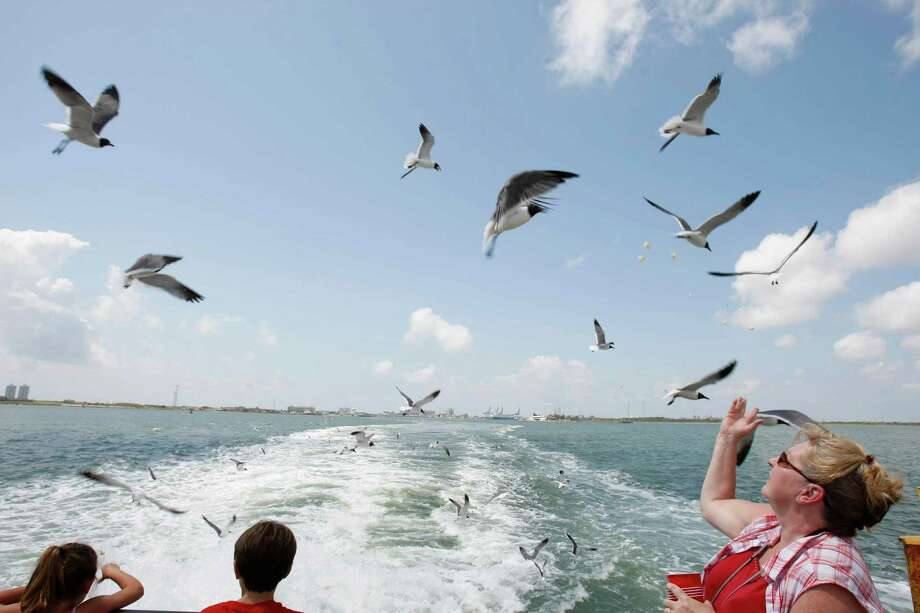 Catch a ride the Bolivar Ferry and feed the sea gulls.  (Nick de la Torre / Chronicle) Photo: Nick De La Torre / Houston Chronicle