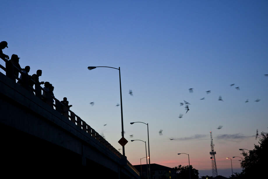 See the bats in action over Buffalo Bayou as they exit the Waugh Street Bridge. Photo: Kathy Adams Clark / Freelance