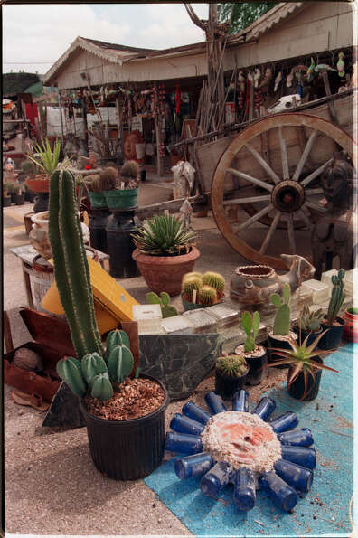 Admire the artwork and do a little shopping at the Cactus King.