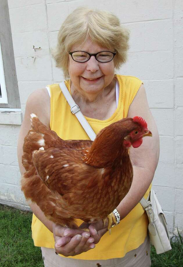 Doris Wallace, of Springfield, a program participant at Bridges Training Center, holds one of the center's egg producing chickens, July 13, 2012 in Tallmadge, Ohio. Developmentally disabled adults are learning to raise food at the center. (Karen Schiely/Akron Beacon Journal/MCT) Photo: KAREN SCHIELY / Akron Beacon Journal