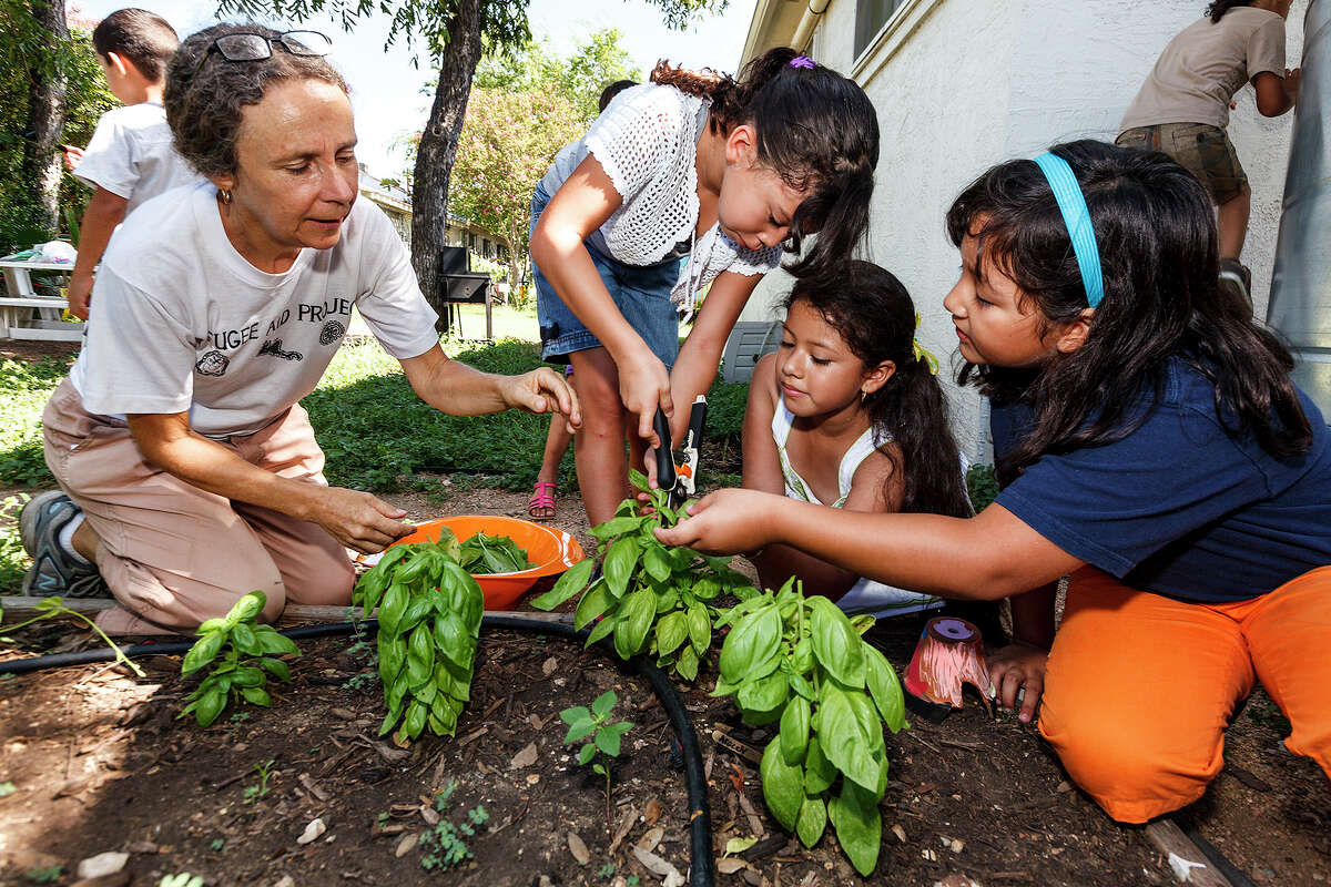 Stacey Merkt (left) watches as Penelope Lopez, Aracely Moreno and Katherine Alanis take cuttings from basil plants they are growing at El Jardin de la Esperanza Community Garden. Children in a summer program there are learning gardening and match at the same time.