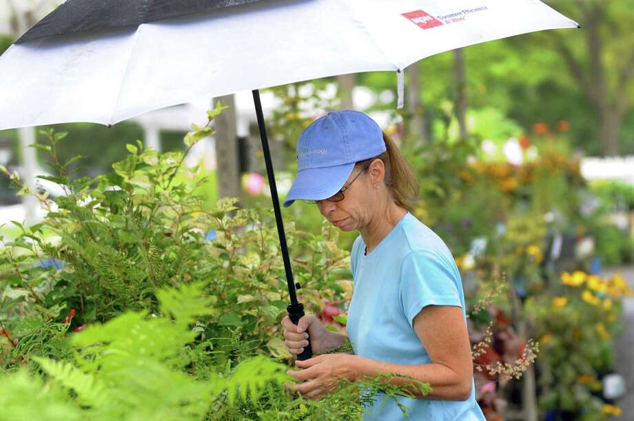 Kathleen Farina of Rexford keeps dry while she shops for shade plants on Saturday, Aug. 11, 2012, at Faddegon's Nursery in Latham. As well as rain in several sections of the Capital Region, there were severe thunderstorm warnings during the afternoon and a tornado warning in Columbia County around noon. (Cindy Schultz / Times Union) Photo: Cindy Schultz