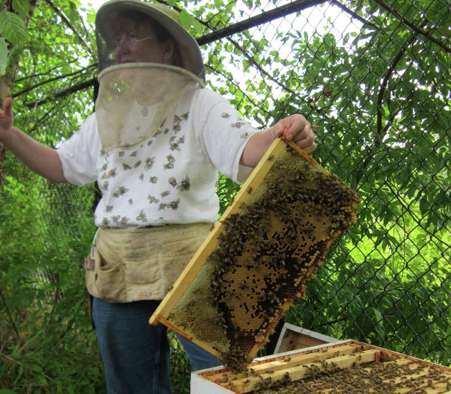 In protective gear, beekeeper Leslie Huston opens a hive Saturday at Wakeman Town Farm for a gathering of prospective beekeepers. Photo: Wakeman Town Farm / Westport News contributed