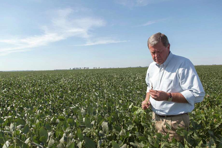 Rep. Tom Latham (R-Iowa) examines soybeans growing on John Askew's farm, which has been affected by drought, in Thurman, Iowa, Aug. 10, 2012. With lawmakers at home for a Congressional summer recess, constituents are venting their anger over delays in enacting a new five-year farm bill. (Steve Hebert/The New York Times) Photo: STEVE HEBERT / NYTNS