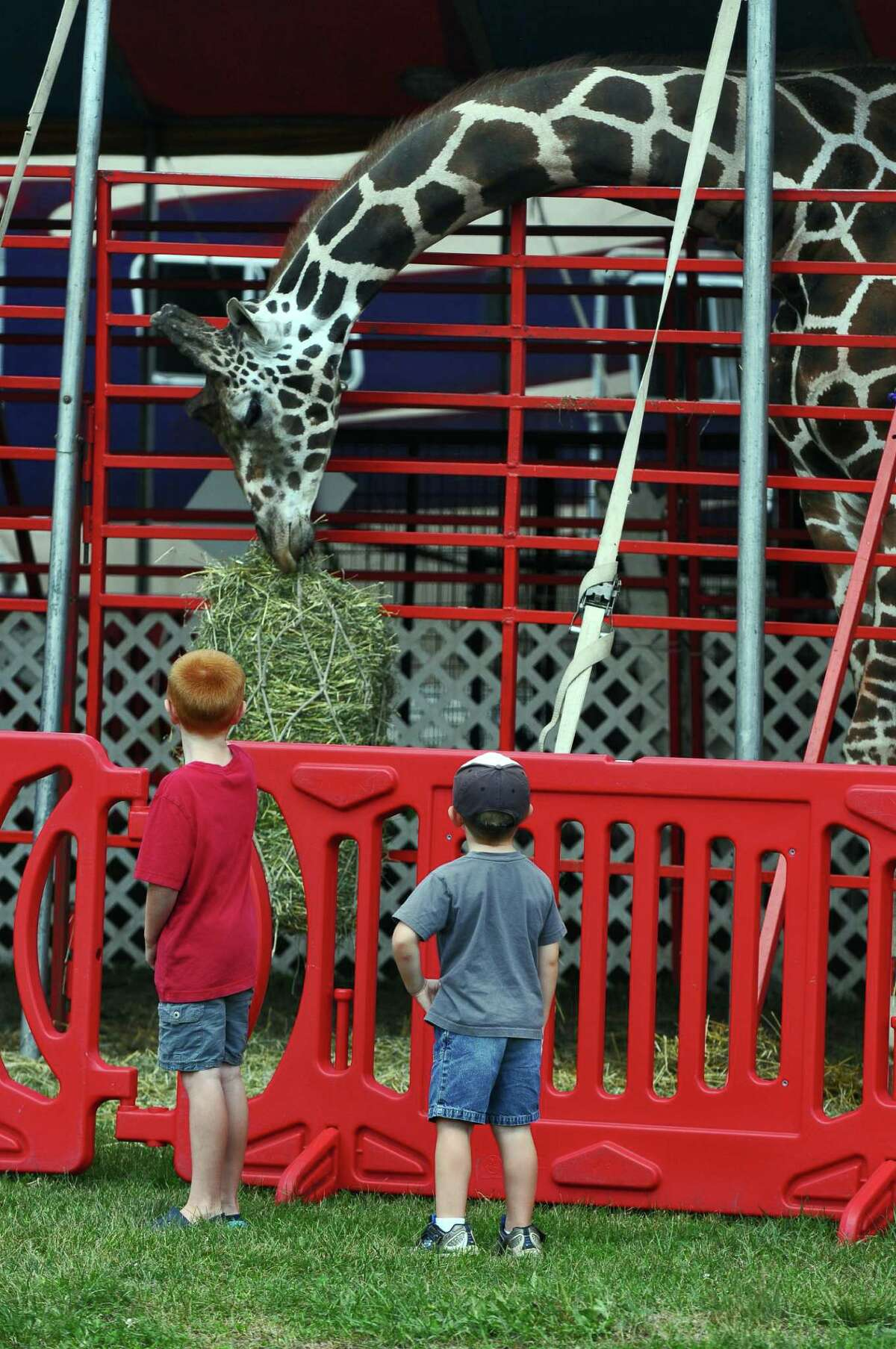 Brady Engel, 7, left, and his cousin Eddie Reville, 6, right, of Selkirk, watch Twigg's, an 18 foot tall giraffe, part of Circus Hollywood, by Corona's of Hollywood, of Florida, have lunch in preparation for the Tuesday beginning of The Altamont Fair, on Sunday Aug. 12, 2012 in Altamont, NY. (Philip Kamrass / Times Union)