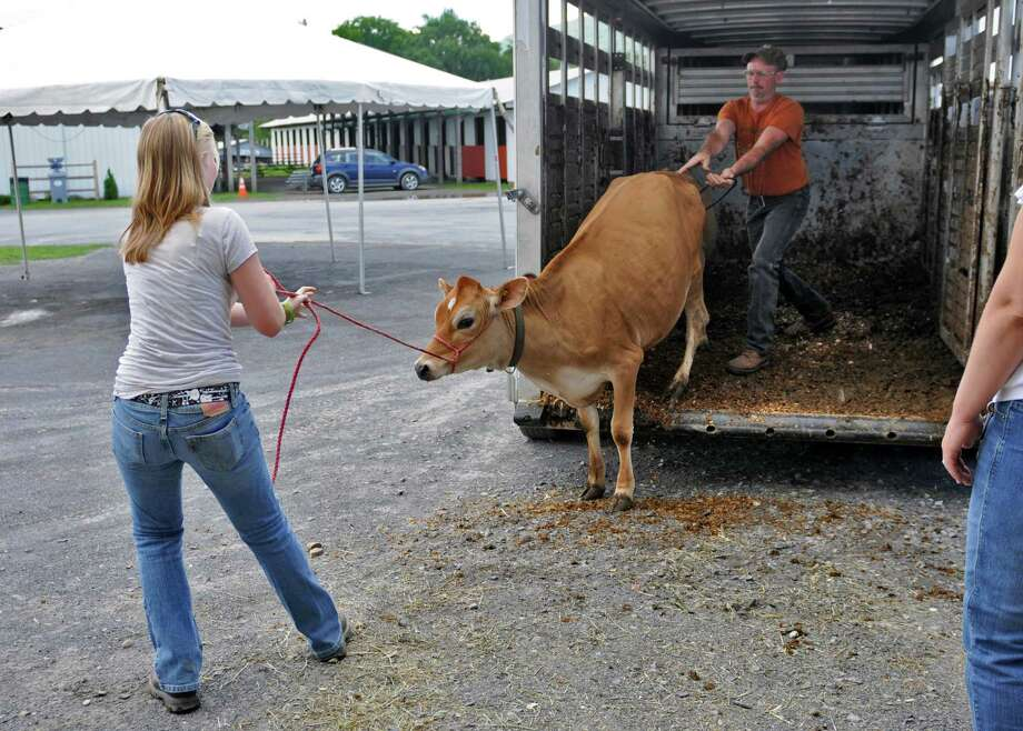 Keith Terrell of Rensselaerville and his family's Willow Brook Valley Farm helps his daughter Amanda, 13, get Lady, a jersey, off a trailer and into the cattle barn, in preparation for the Tuesday beginning of The Altamont Fair, on Sunday Aug. 12, 2012 in Altamont, NY.   (Philip Kamrass / Times Union) Photo: Philip Kamrass / 00018808A