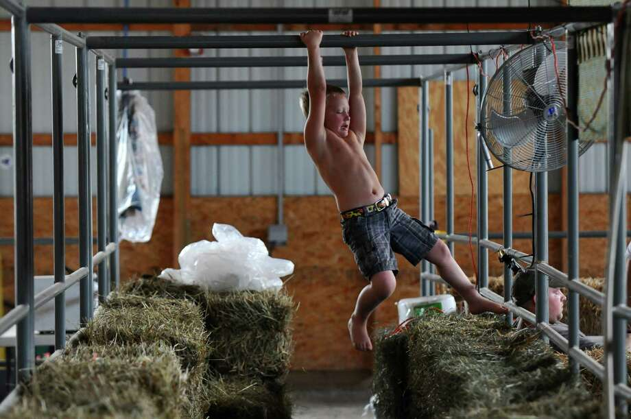 Ruger VanWie of Clarksville, 7, passes some time swinging near bales of hay in the cattle barn as his family prepares a space for their cows in the Meadowbrook 4-H club area,  in preparation for the Tuesday beginning of The Altamont Fair, on Sunday Aug. 12, 2012 in Altamont, NY.   (Philip Kamrass / Times Union) Photo: Philip Kamrass / 00018808A