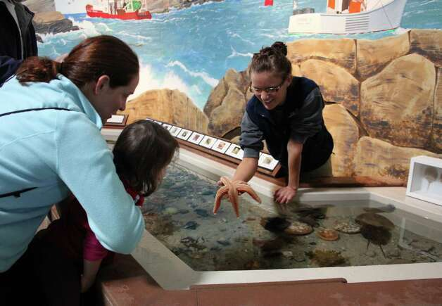 A young visitor to the Maine State Aquarium in Boothbay Harbor enjoys the sea-creature touch tank. Photo: Kathleen Scott / For The Express-News, Kathleen Scott / For The Express
