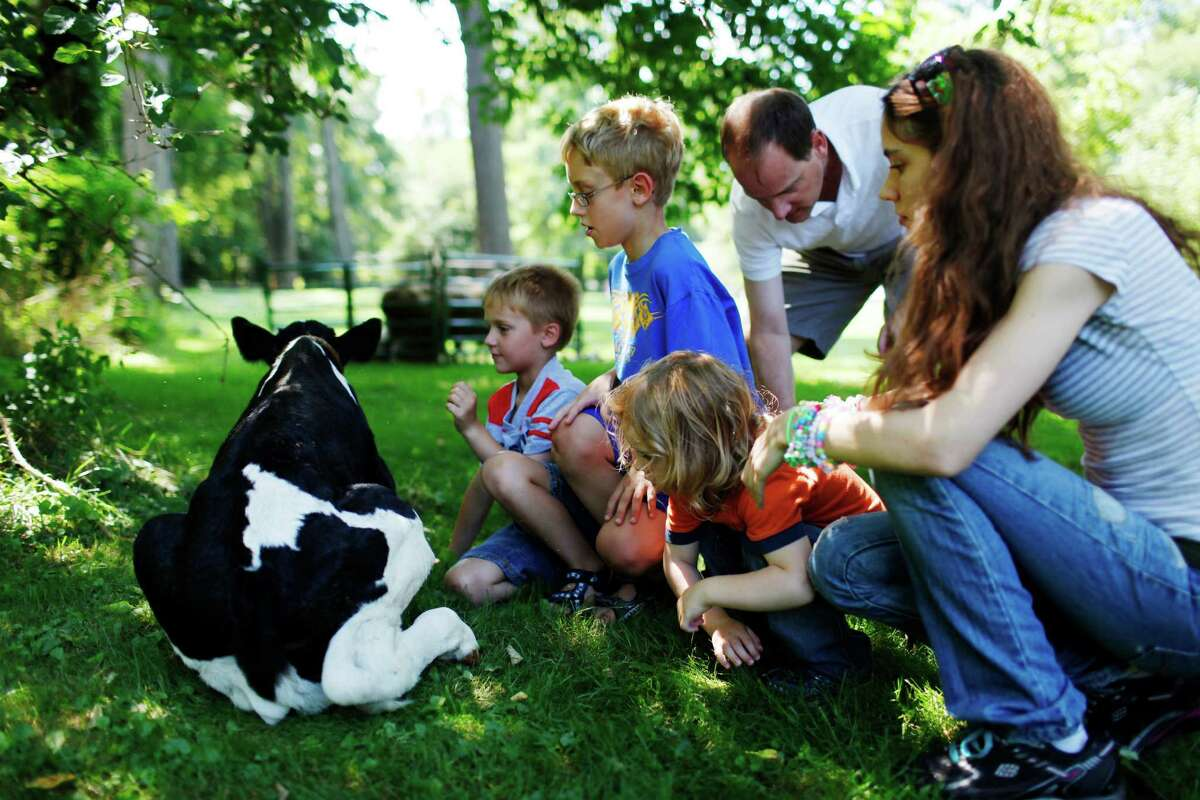 Attendees of 18th-Century Day, from left, Ben and Max of Duanesburg and Owyn of Schuylerville, pet a 2 day old calf from Peckhaven Farm at the Schuyler House, Sunday Aug. 12, 2012 in Schuylerville, N.Y. (Dan Little/Special to the Times Union)