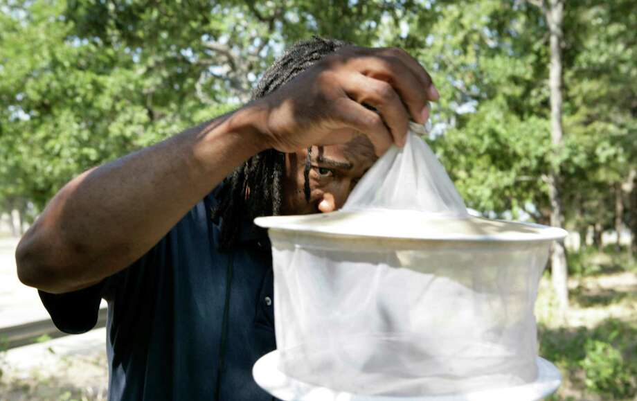 In this Aug. 7, 2012 photo, Byron Chism, Mosquito Technician at Dallas County Mosquito Lab, holds a trap while collecting mosquitoes  Local, state and federal officials are set to meet in Dallas to discuss options for responding to the growing number of West Nile virus cases in North Texas.   (AP Photo/The Dallas Morning News, Evans Caglage)  MANDATORY CREDIT; MAGS OUT; TV OUT; INTERNET OUT; AP MEMBERS ONLY Photo: Evans Caglage, Associated Press / The Dallas Morning News