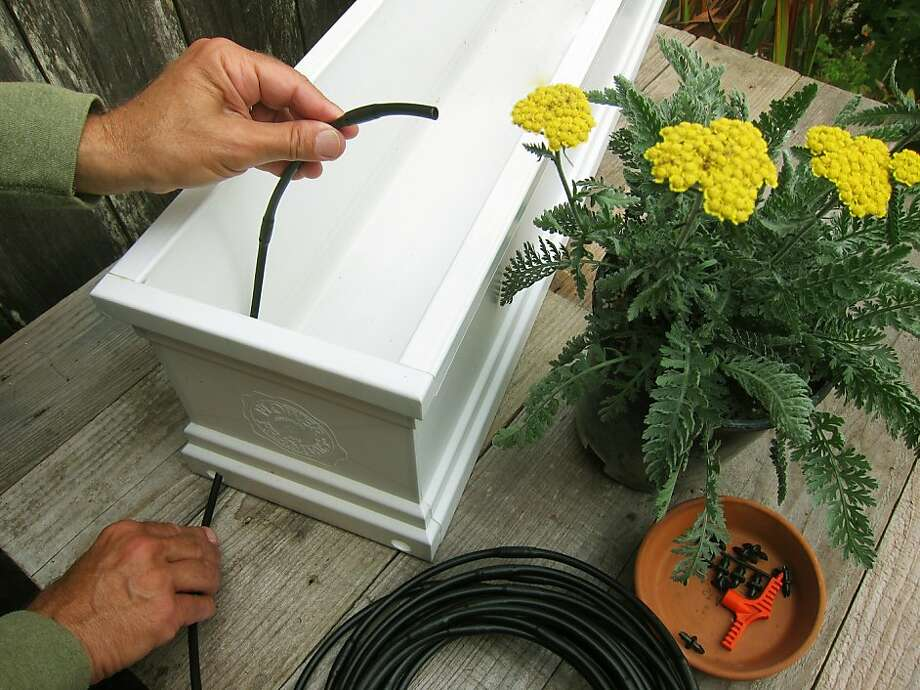 A drip irrigation system inserted through a drainage hole will ensure water for window-box plantings. Photo: Pam Peirce