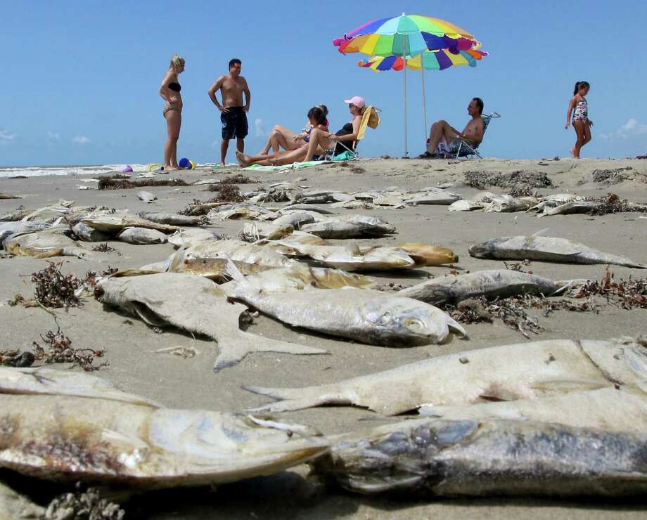 red tide wipes out mess of fish on galveston beaumont