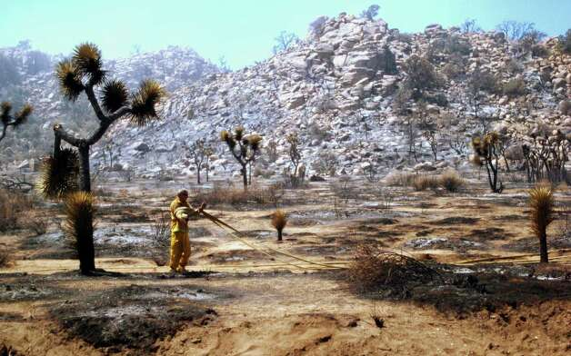 In a Monday photo, a CalFire firefighter lays a hose line amid scorched brush and Joshua trees as crews worked to contain the Quail Fire near Keys View Road in the in Joshua Tree National Par in Californiak. Firefighters hope to have the blaze, which is in hard to reach rocky terrain, 90% contained by late Tuesday. (AP Photo/The Desert Sun, Denise Goolsby) Photo: Associated Press