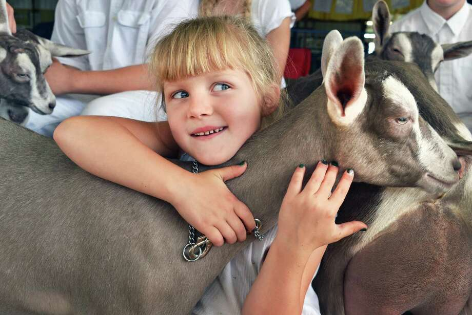 "Five-year-old Anna Stoltman of Georgetown, NY, hugs ""Mary Lou,"" a Toggenberg goat, during the poultry show at the Altamont Fair Tuesday Aug. 14, 2012.  (John Carl D'Annibale / Times Union) Photo: John Carl D'Annibale / 00018832A"