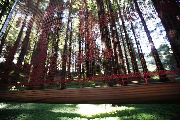 Nami Yamamoto has strung fog catchers in the redwood grove, inspired by a Japanese folktale. Photo: Sonja Och, The Chronicle