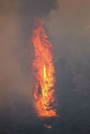 A tree becomes a giant torch as it burns during a wildfire Tuesday near Cle Elum. (AP Photo/Elaine Thompson) Photo: Associated Press
