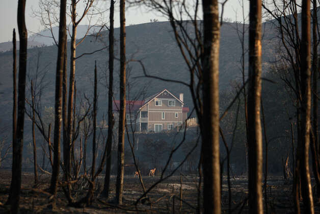 A house that survived the Taylor Bridge Fire is shown as deer run past on Wednesday, August 15, 2012 along Highway 10 near Ellensburg. Photo: JOSHUA TRUJILLO / SEATTLEPI.COM