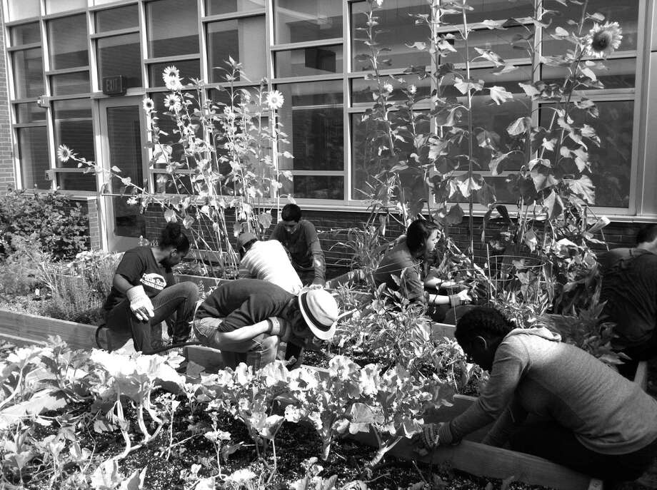 Greenwich teens pulled weeds from the vegetable garden at Glenville School this summer as part of the Greenwich Youth Conservation Project, which is sponsored by the Greenwich Department of Social Services. Participants learned landscaping skills and the expectations that go along with a real job. Photo: Contributed Photo