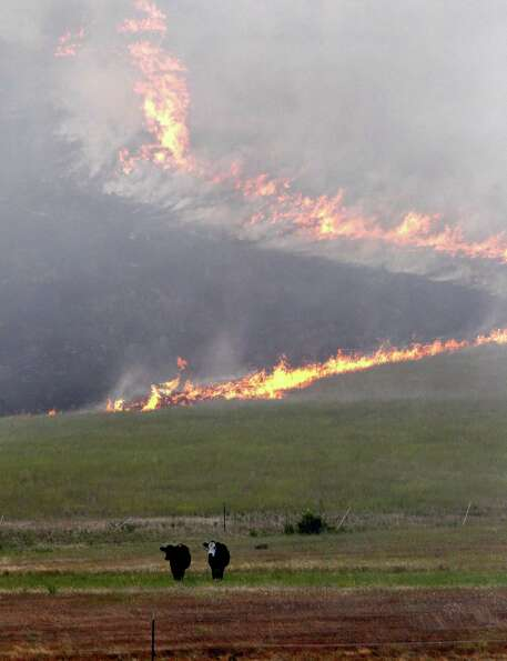 Cows stand in a pasture as a wildfire burns down a hillside behind Tuesday, Aug. 14, 2012, near Cle