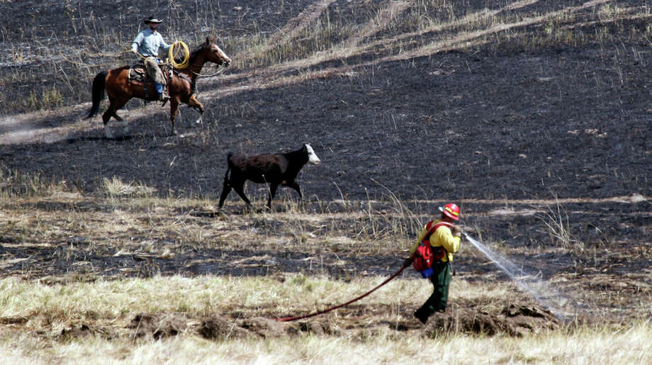 A rancher drives a pair of stray calves through a burned out area and past a firefighter Wednesday, Aug. 15, 2012, near Cle Elum, Wash. Crews fighting the large blaze in central Washington hope to increase containment levels by Wednesday evening, but are keeping a wary eye on weather conditions later in the week. The fire burning near Cle Elum has burned dozens of homes and caused about 900 people to evacuate. Photo: Elaine Thompson / Associated Press
