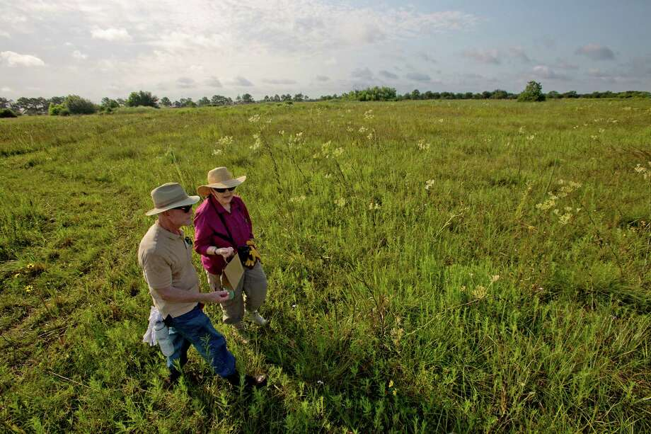 8/10/12: Phil Beekman and Karen Beekman, a members of the Katy Prairie Conservatory collects Ruff Coneflower, Black-Eye Susan's and Texas Coneflower at the College Park Prairie, in Deer Park, Texas.   Last year, in Deer Park of all places, prairie hunters discovered the College Park Prairie -- 53 acres of pristine grassland, a rare surviving piece of the ecosystem that once dominated our area, full of plants that make naturalists swoon. And as soon as the prairie hunters found it, they prepared to say goodbye: In only a few months, a developer planned to bulldoze the prairie to build suburban housing, and the land's cost seemed far out of conservationists' reach. Now, though, they hope to save it. For the Chronicle: Thomas B. Shea Photo: Thomas B. Shea / © 2012 Thomas B. Shea
