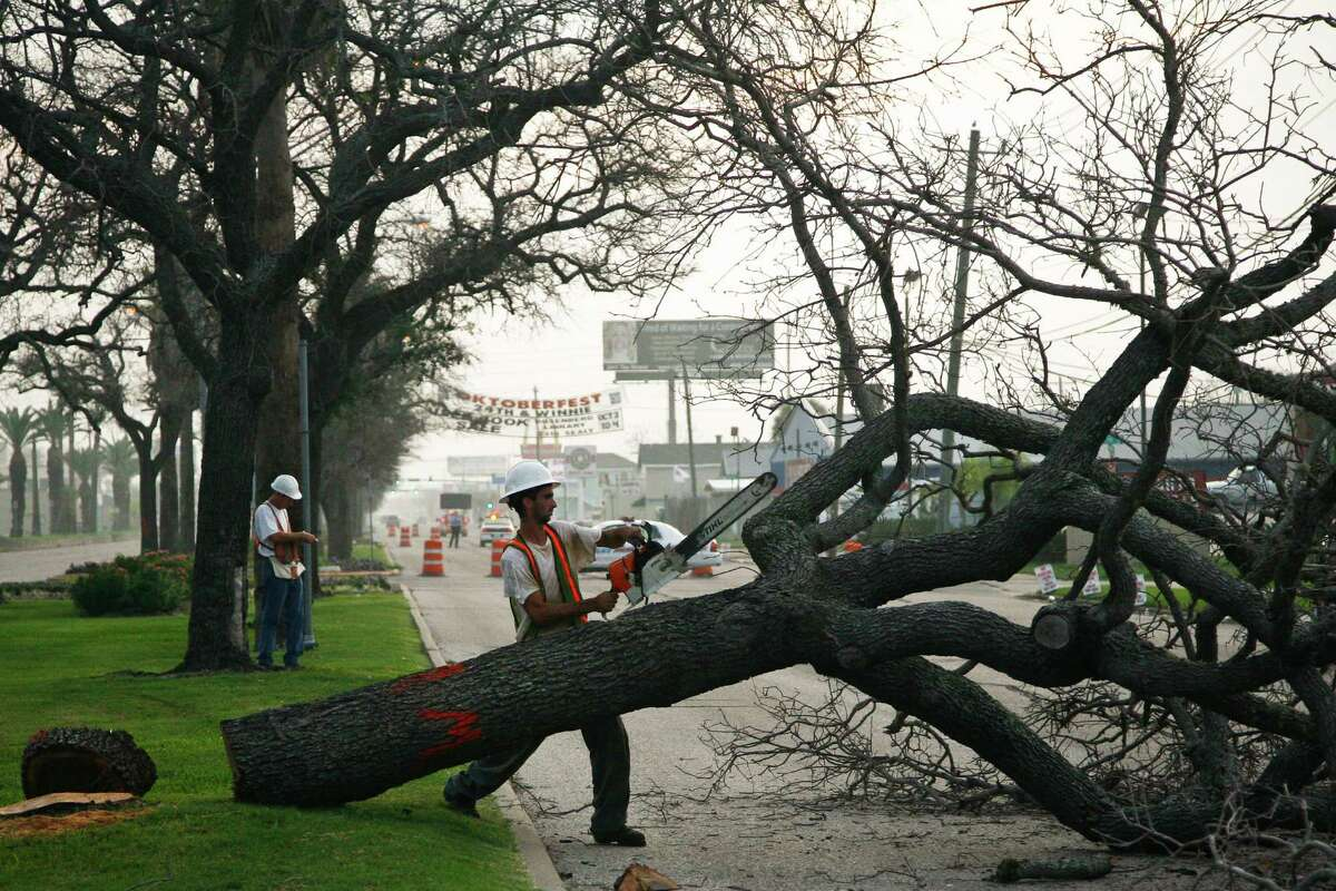 Damian Truxillo trims one of the historic oak trees on the Broadway  esplanade in Galveston in 2009.  All but a few of the hundreds of historic oaks planted after the 1900 storm were killed by the salt water from Ike's storm surge.