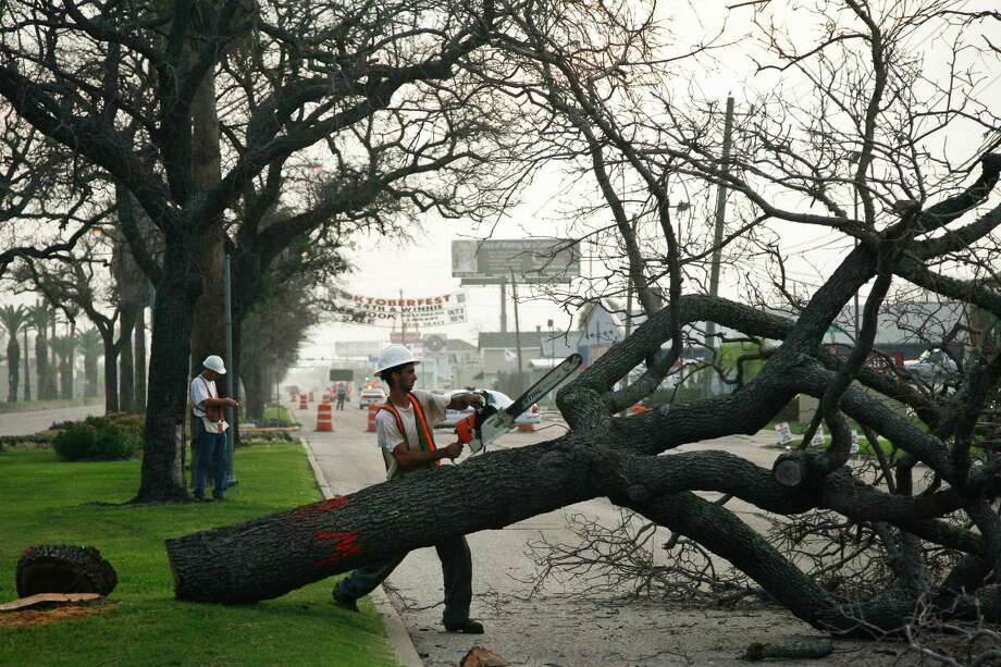 Damian Truxillo trims one of the historic oak trees on the Broadway  esplanade in Galveston in 2009.   All but a few of the hundreds of historic oaks planted after the 1900 storm were killed by the salt water from Ike's storm surge. Photo: Michael Paulsen / Houston Chronicle