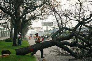 Damian Truxillo trims one of the historic oak trees on the Broadway St. esplanade in Galveston Saturday, Sept. 26, 2009.  All but a few of the hundreds of historic oaks planted after the 1900 storm were killed by the salt water from Ike's storm surge and must be removed.  A crew started working on the project at 6:00am and an estimated 100 trees will be removed by 7:00pm tonight.  The crew will work throughout the week until the project is completed.  ( Michael Paulsen / Chronicle )