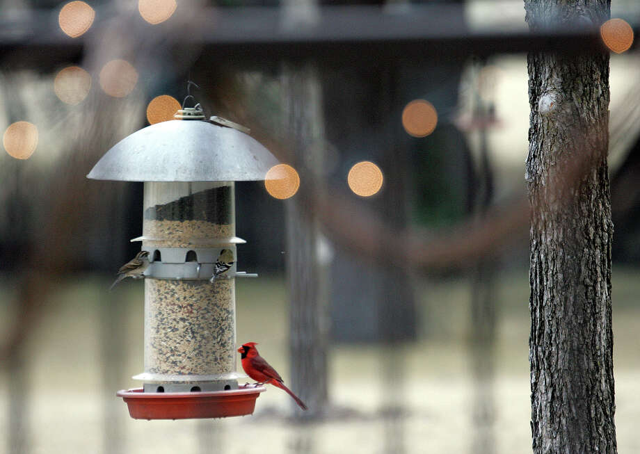 A cardinal stops by a backyard bird feeder. Photo: Express-News File Photo / SAN ANTONIO EXPRESS-NEWS