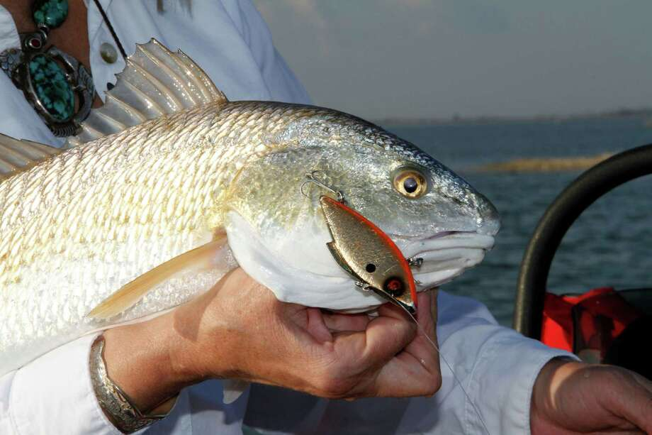 Redfish have been biting along the coast lately, with several guides reporting catches. Photo: Shannon Tompkins / Houston Chronicle