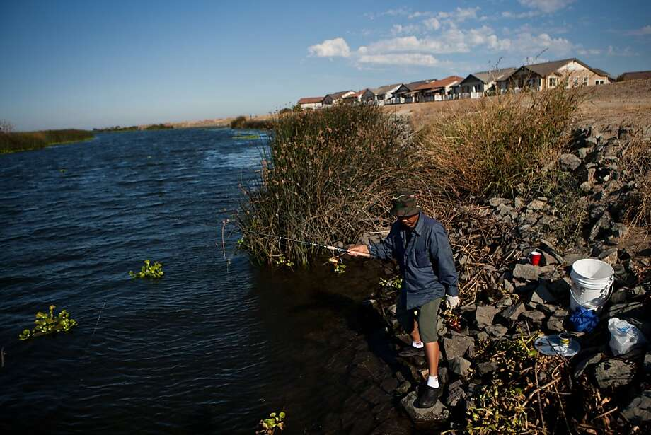David Nguyen fishes from a levee separating the Sacramento-San Joaquin River Delta's Pixley Slough from the Spanos Park subdivision in Stockton, Calif., August 17, 2012. Photo: Max Whittaker/Prime, Special To The Chronicle