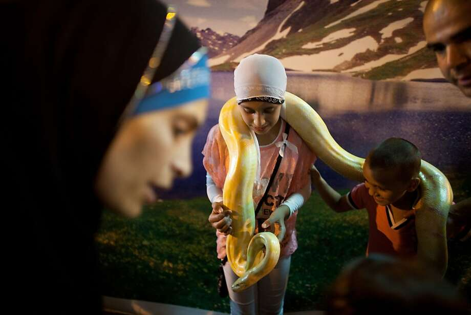 Israeli Arabs get their picture taken with a pet snake at an amusement park as Muslims celebrated the Eid al-Fitr holiday, which marks the end of the holy fasting month of Ramadan on August 20, 2012 at the old city of Acre, Israel.  (Photo by Uriel Sinai/Getty Images) Photo: Uriel Sinai, Getty Images