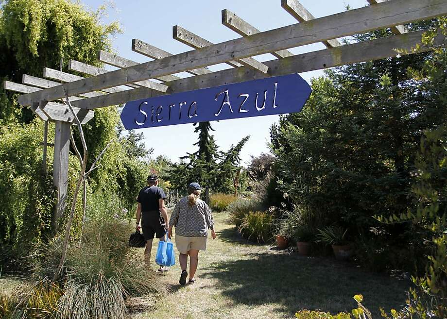 Sierra Azul, a retail nursery and sculpture garden in Watsonville, welcomes the public to wander its scenic paths and picnic in the area. Photo: Sean Culligan, The Chronicle
