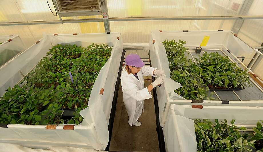 Monsanto received a a score of 57.27, dropping 4.4 points from the 61.7 it got in 2013. Photo: Noah Berger, Bloomberg