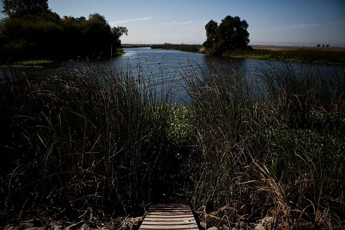 The Sacramento-San Joaquin River Delta's Pixley Slough near the Spanos Park subdivision in Stockton, Calif., August 17, 2012.
