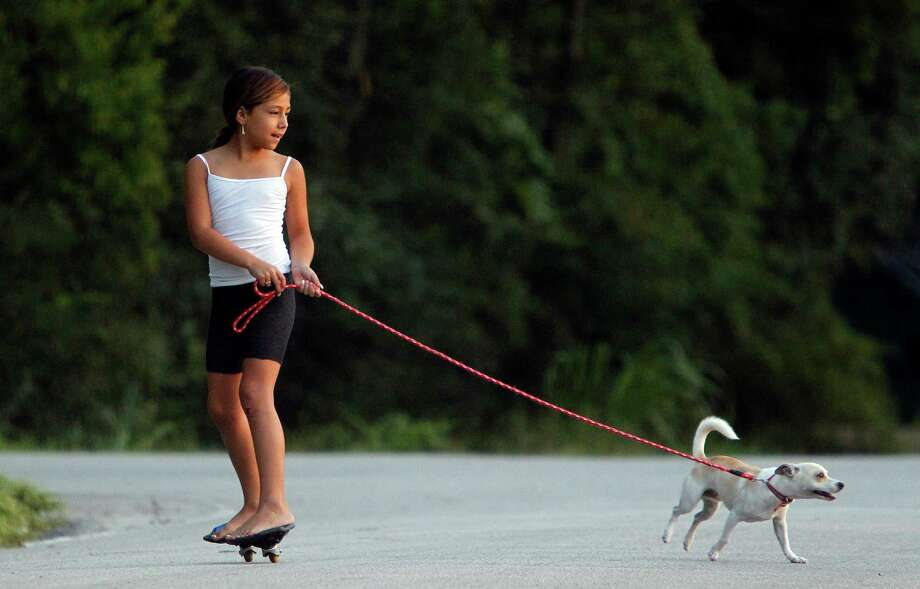 Jeidy Zumaya, 7, takes 'Nino', 8 month-old Chihuahua mix, on an early morning stroll at Schwartz Park on Tuesday, Aug. 21, 2012, in Houston. Photo: Mayra Beltran, Houston Chronicle / © 2012 Houston Chronicle