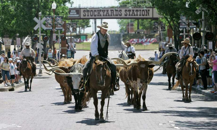 Drover Jack Edmondson leads longhorn cattle along Exchange Avenue at the Fort Worth Stockyards during the twice daily cattle drive on Tuesday, June 3, 2008, in Fort Worth, Texas. A drover is the 1800s term for a cowboy who led livestock on cattle drives. The Fort Worth cattle drive started in 1999 to draw tourists to the historic Stockyards. Photo: Jeff Chiu, AP / AP