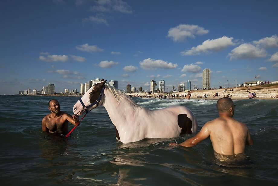 An Israeli Arab man swims with a horse  in the Mediterranean Sea off the beach in Tel Aviv, Israel , the third day of Eid al-Fitr, Tuesday, Aug. 21, 2012. Eid al-Fitr. One of the most important holidays in the Muslim world, Eid al-Fitr is marked with prayers, family reunions and other festivities.  Photo: Oded Balilty, Associated Press