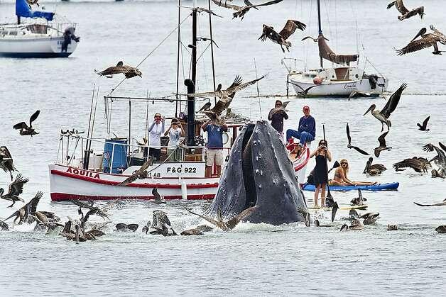 Whale Visit